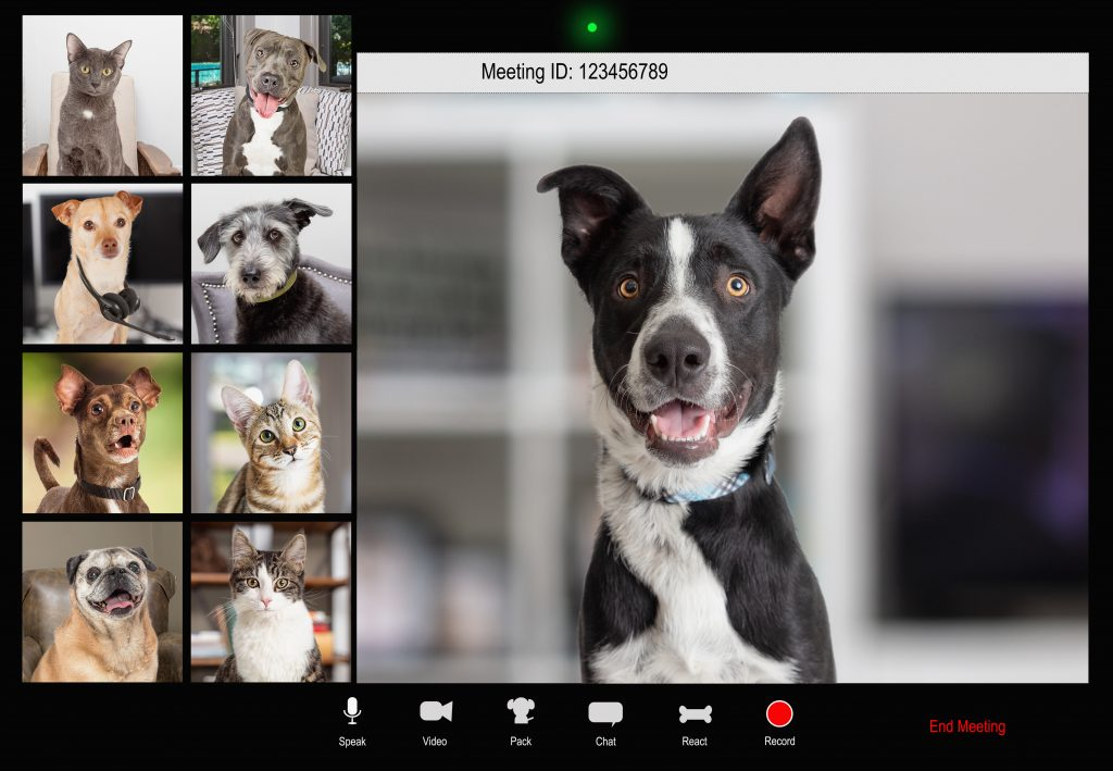 Dogs using video conferencing solution